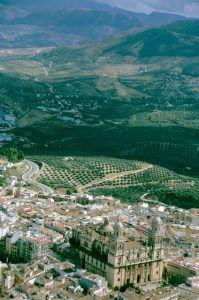 Jaen Kathedrale+Olivenhaine